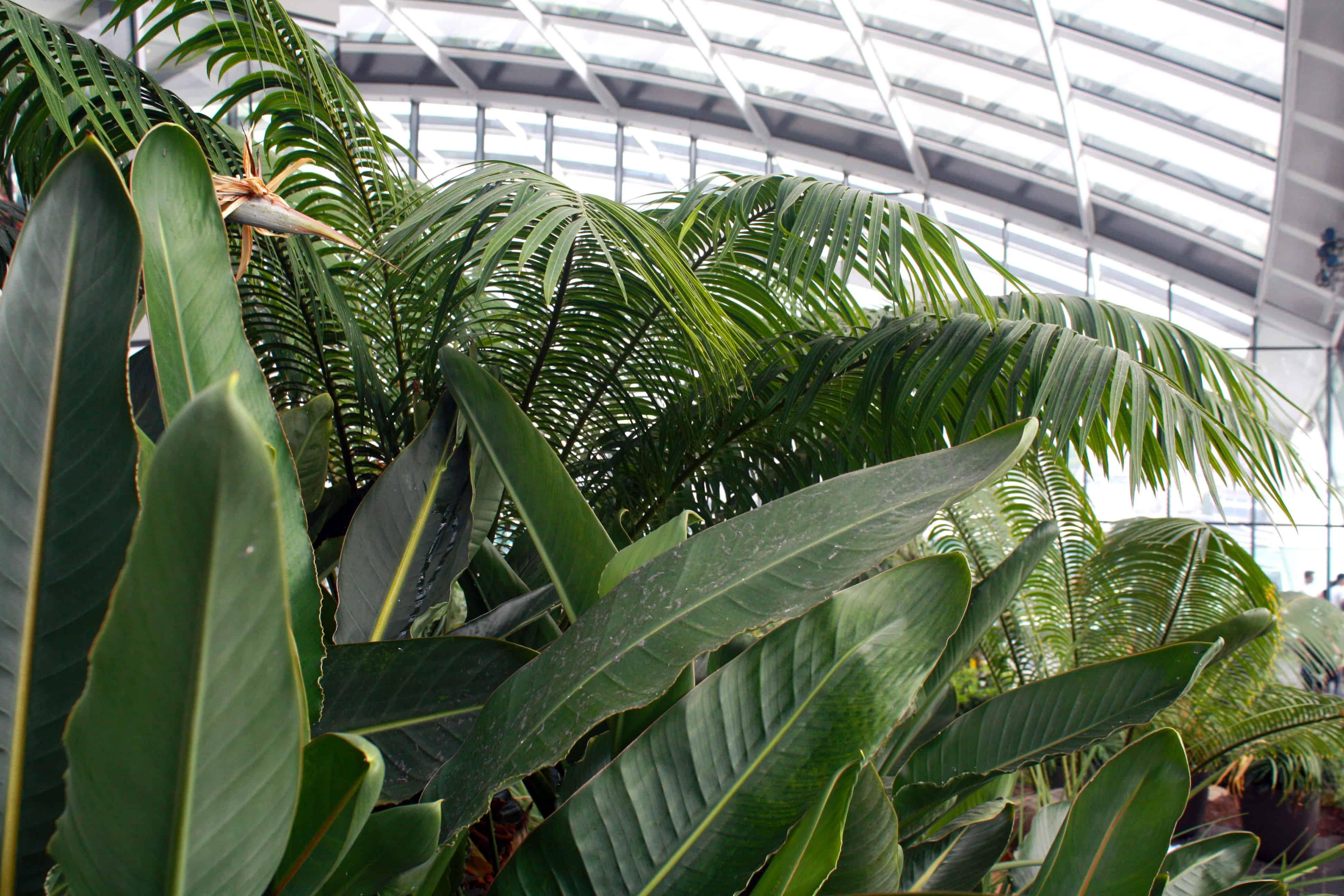 Plants in Sky Garden