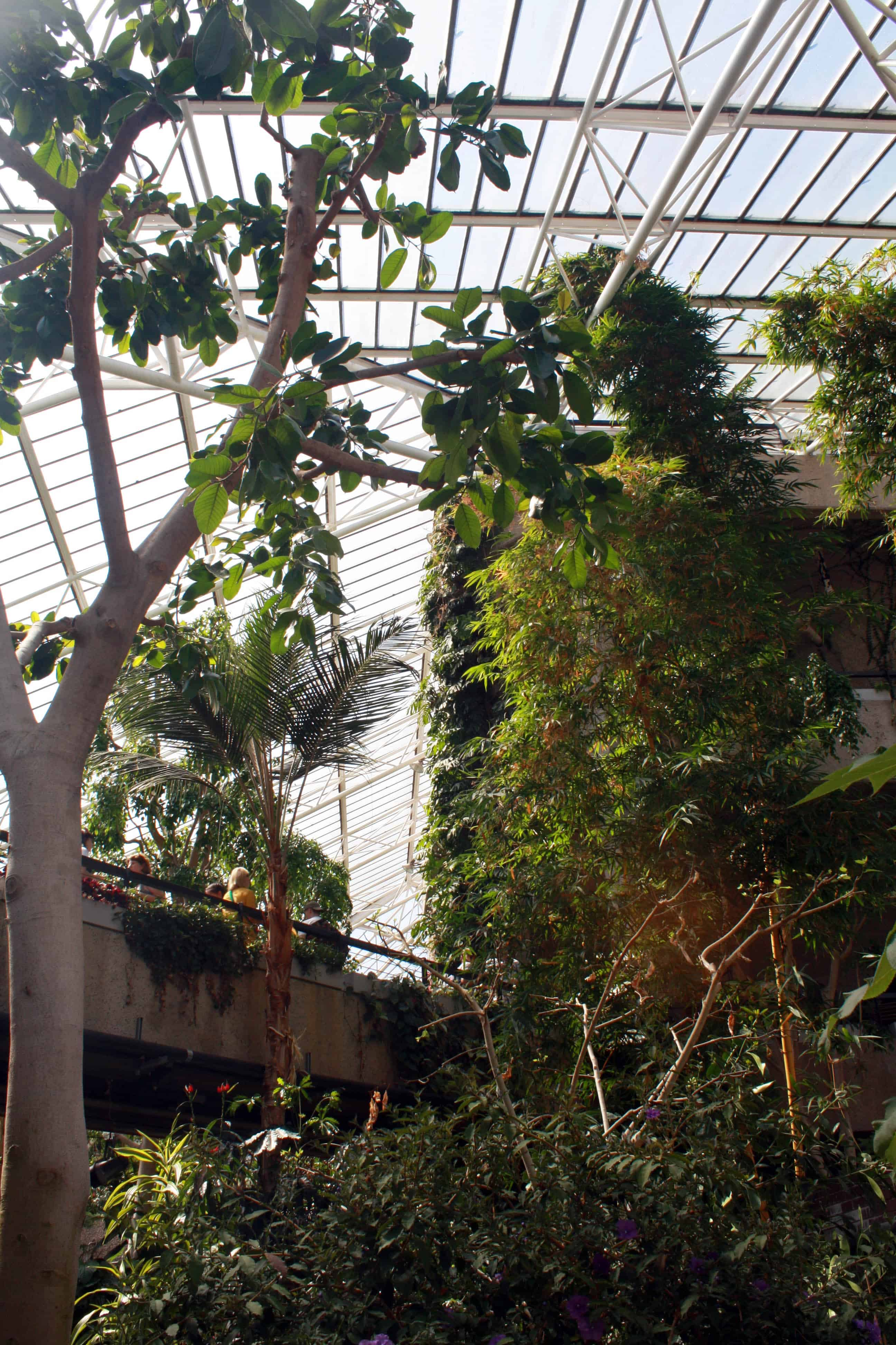 Bridge and trees in Barbican Conservatory, London