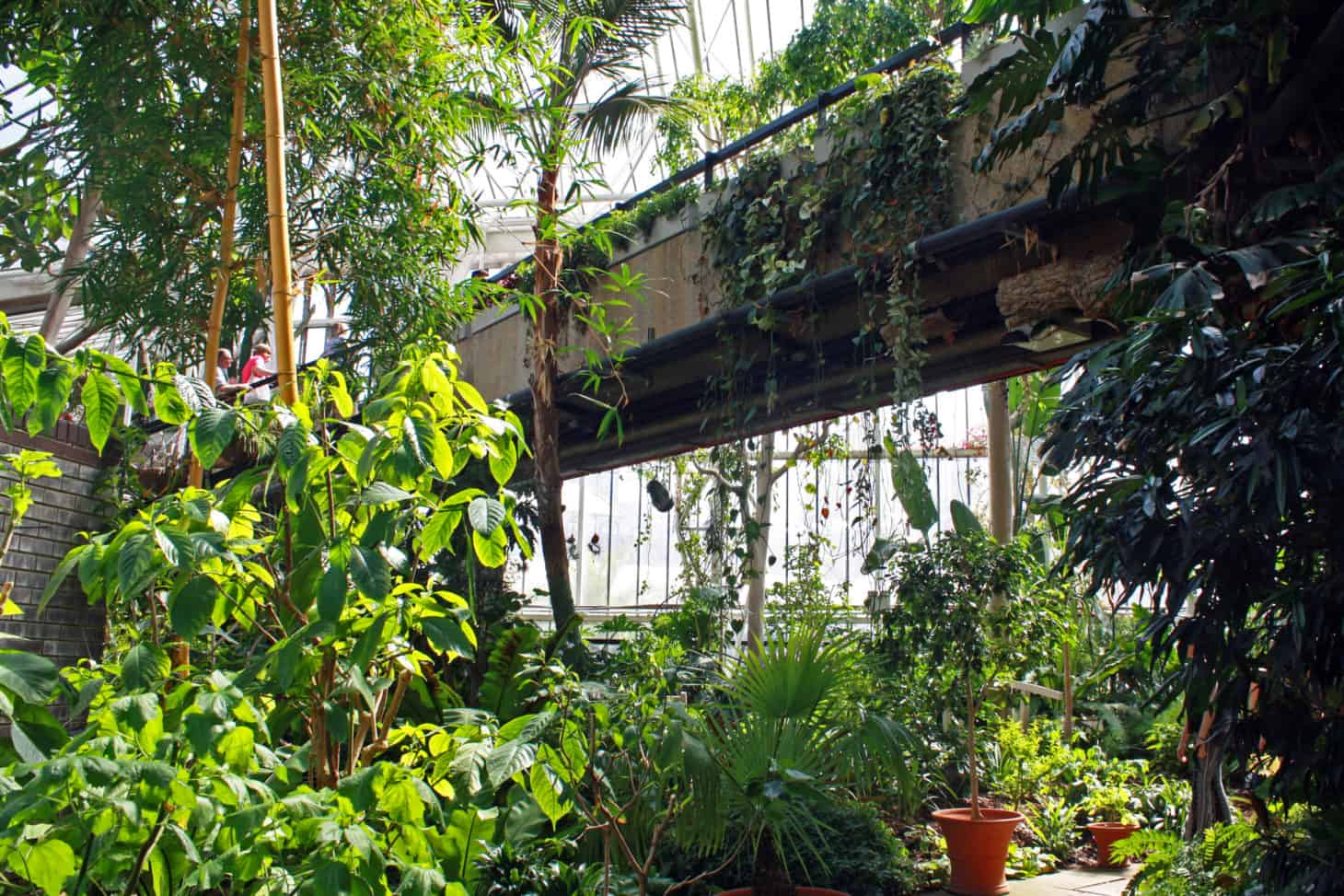 Bridge in Barbican Conservatory, London
