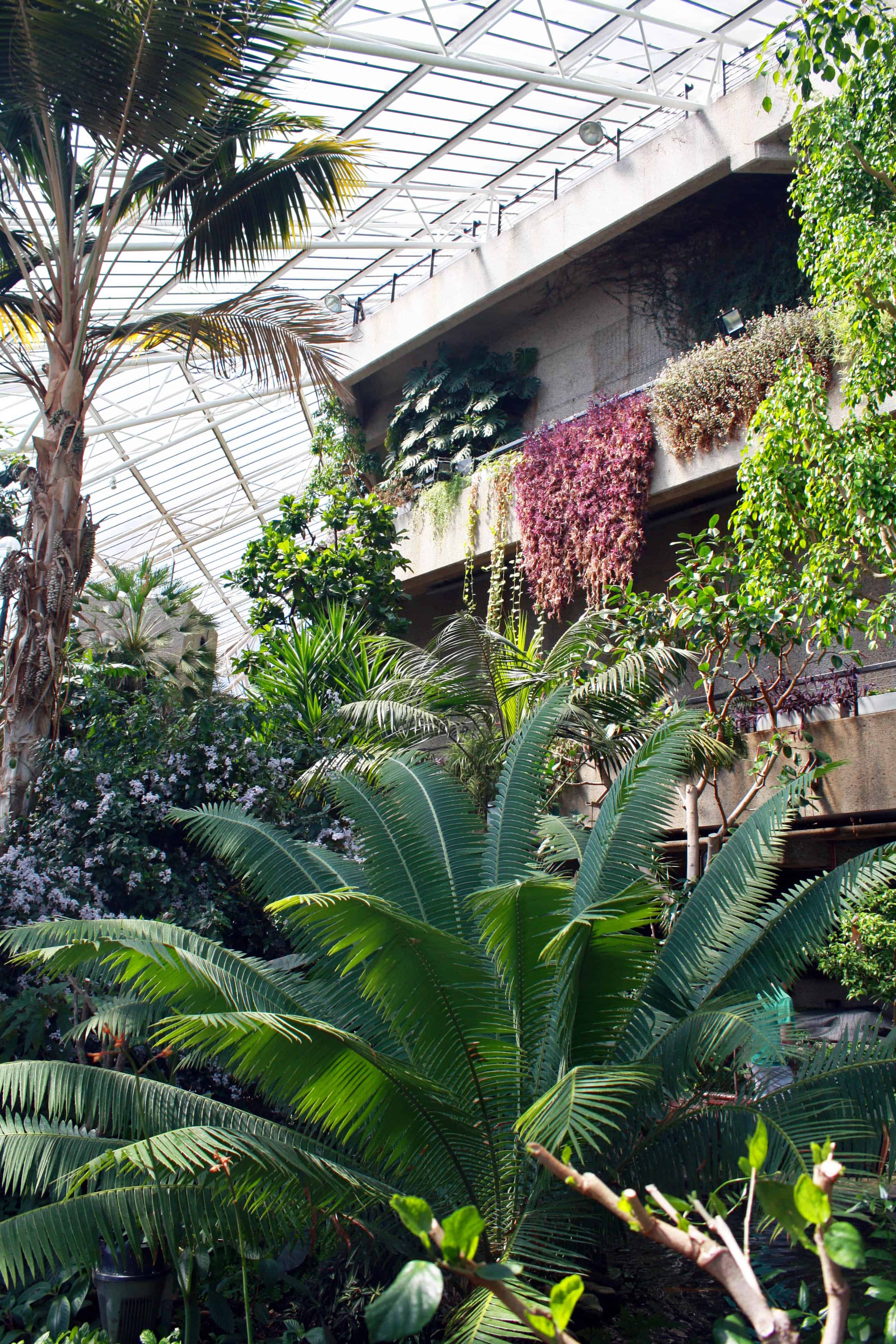 Inside Barbican Conservatory, London