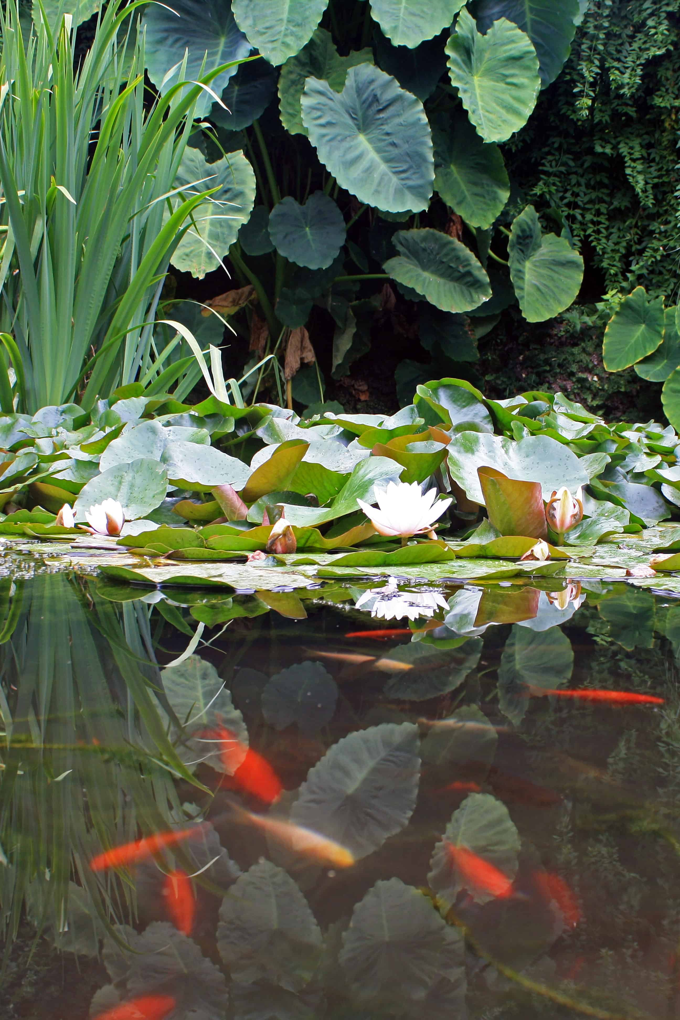 Pond in Botanical Garden of the University of Coimbra, Portugal
