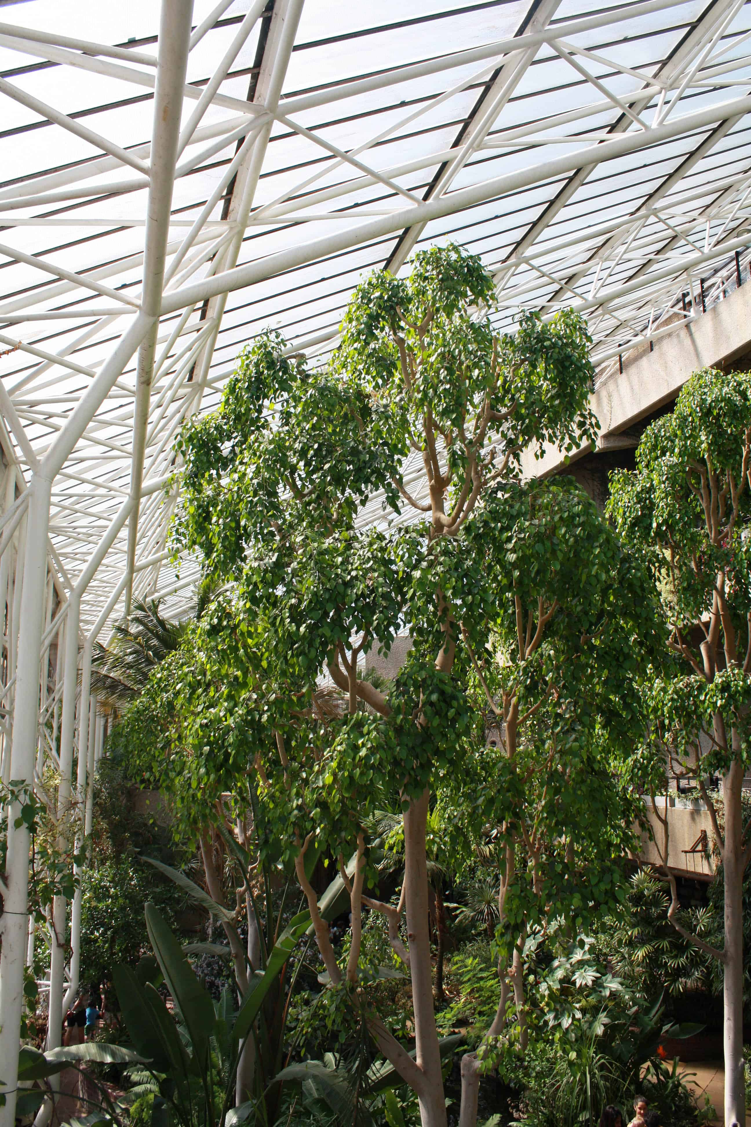 Treetops in Barbican Conservatory, London