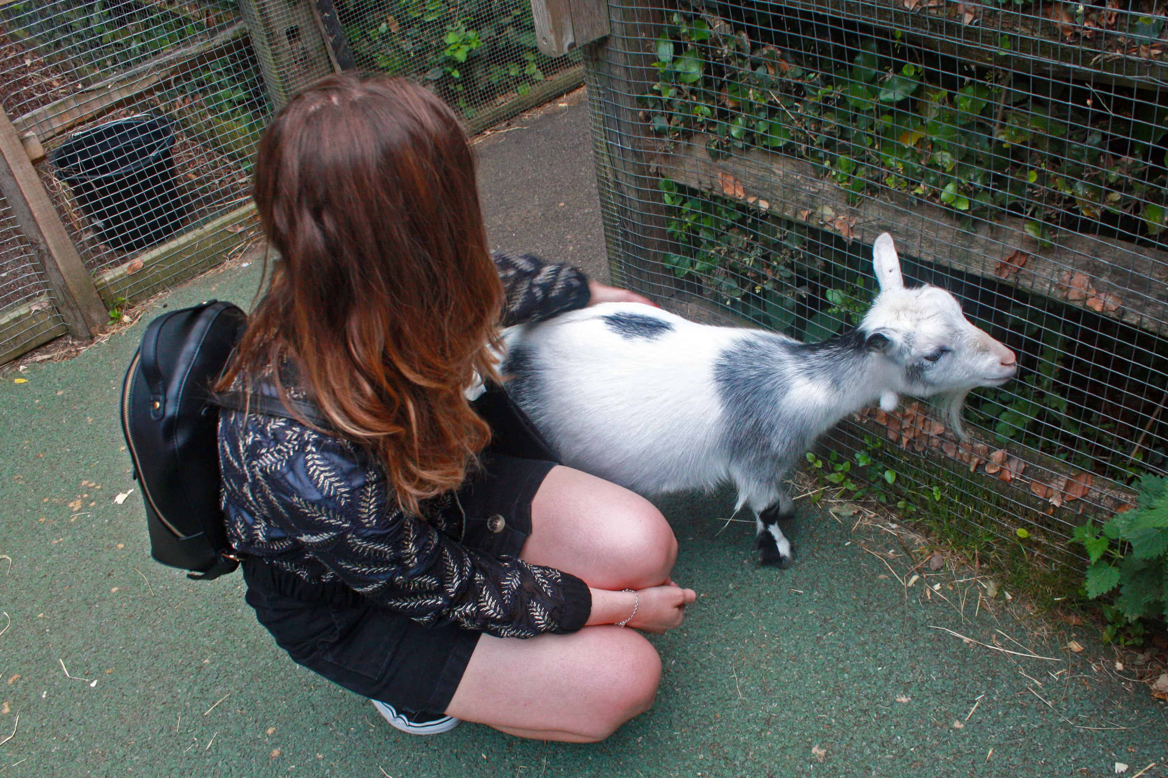 With a goat at London Zoo
