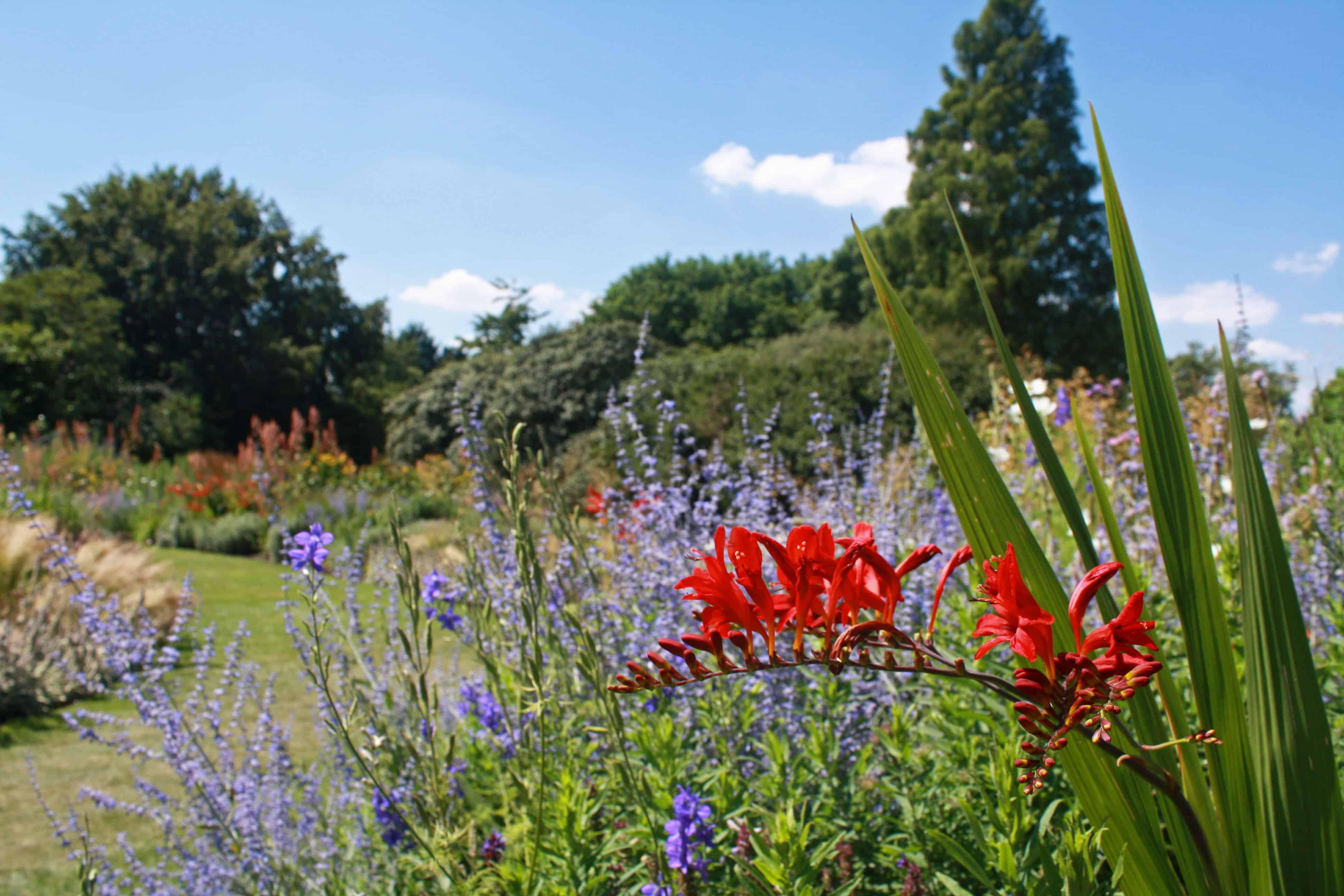 Flowers in Cambridge University Botanic Garden