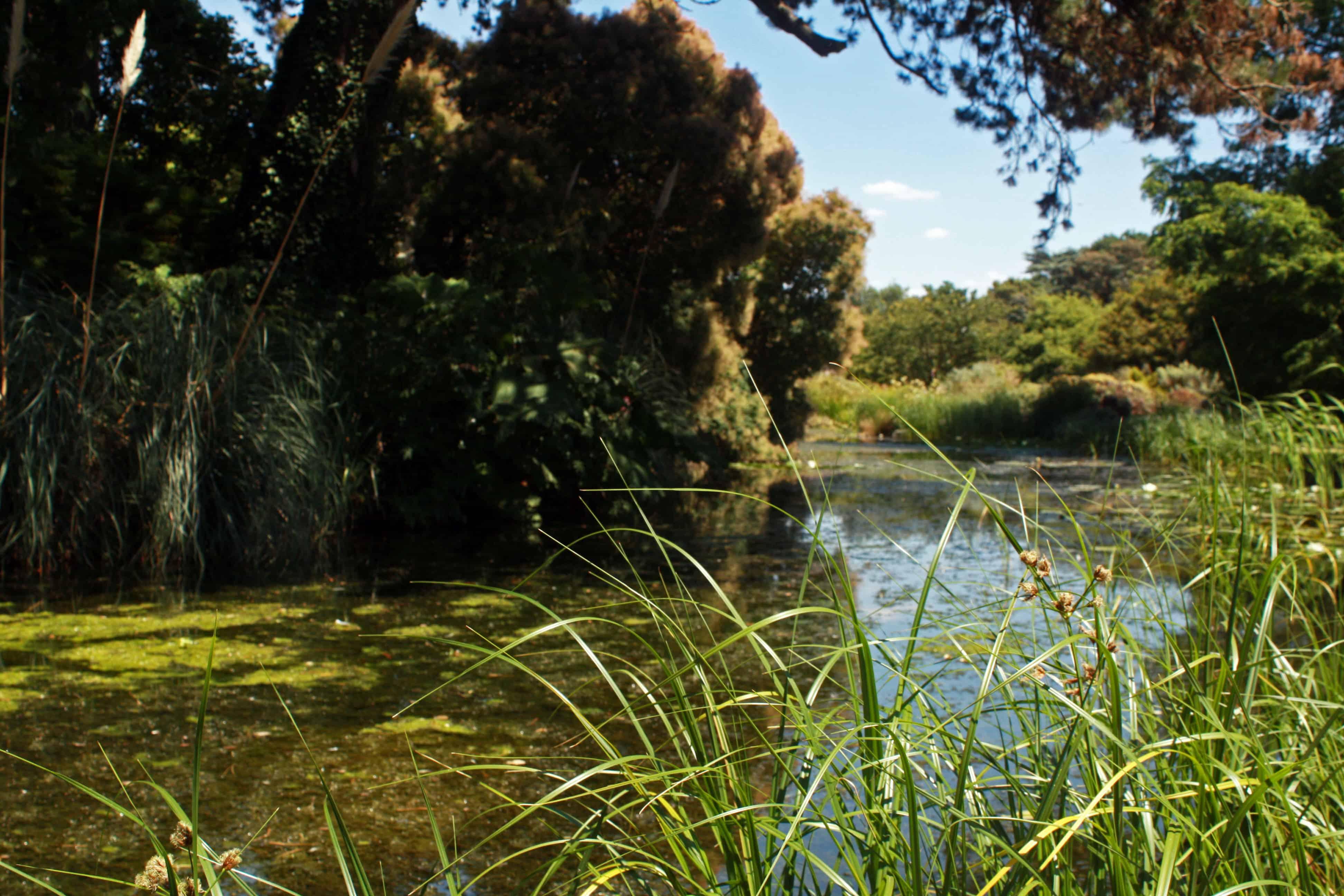 Pond in Cambridge University Botanic Garden