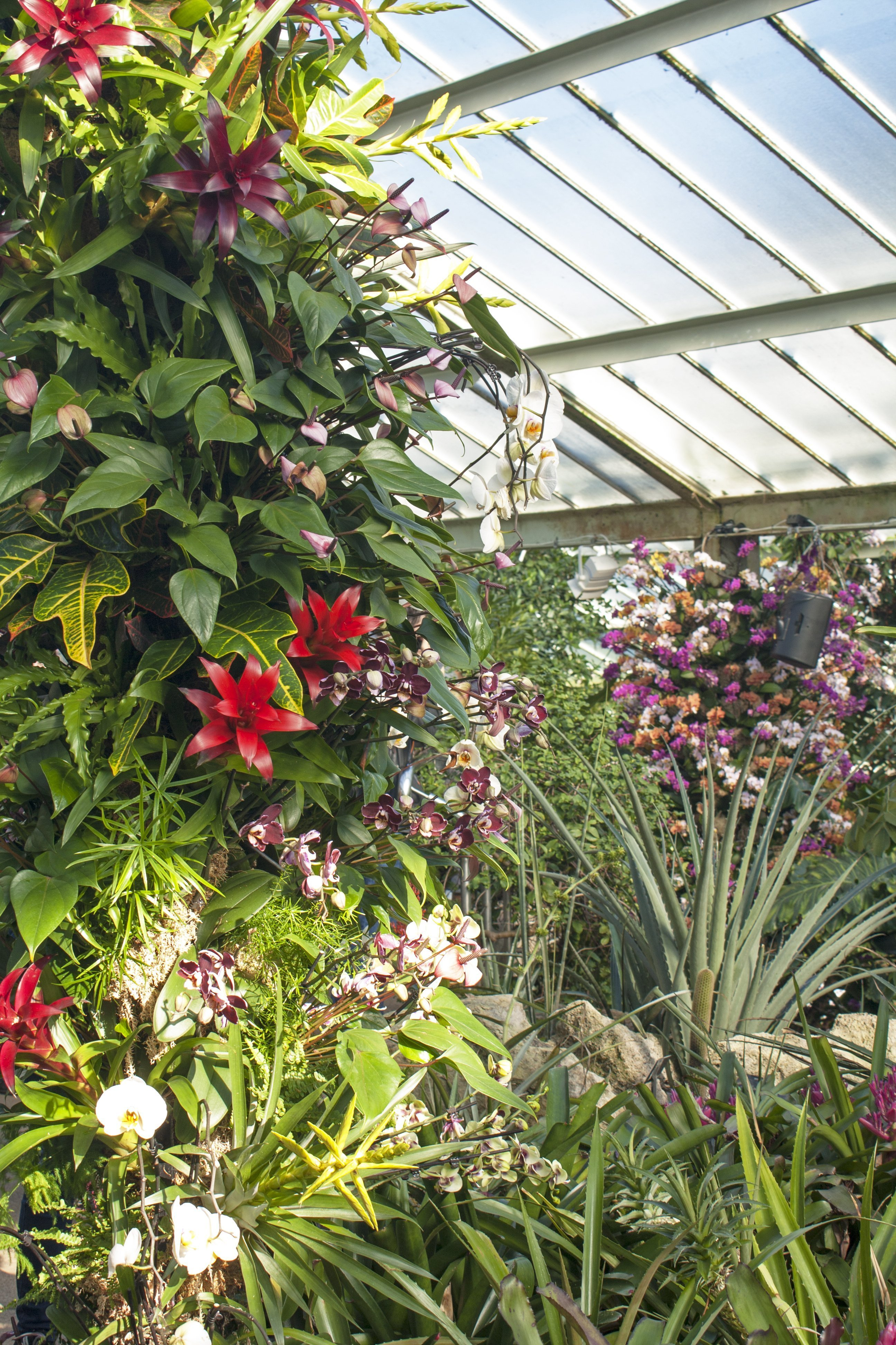bromeliad and ivy arch at orchid festival Kew Gardens