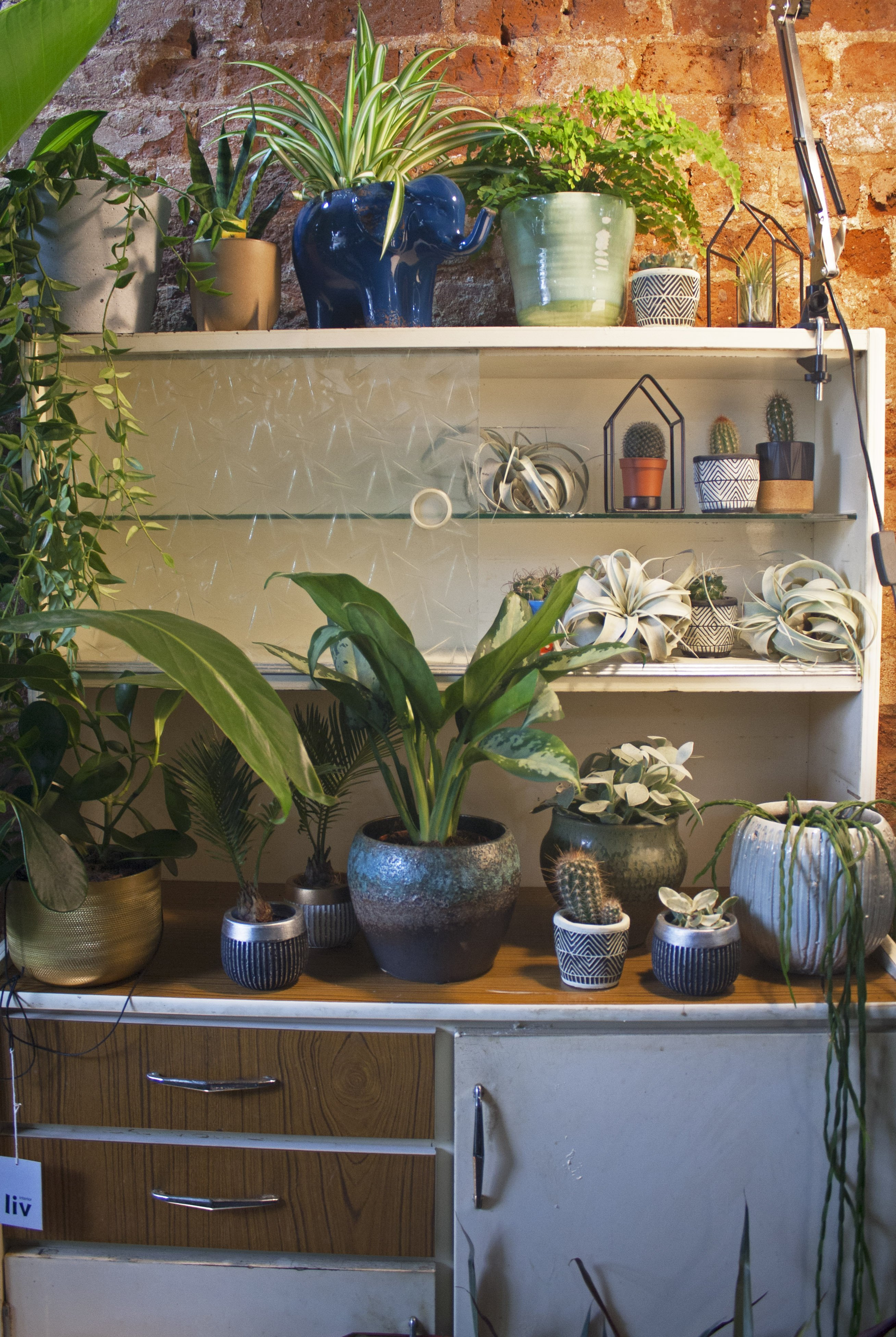 Cabinet with plants in Conservatory Archives, Hackney