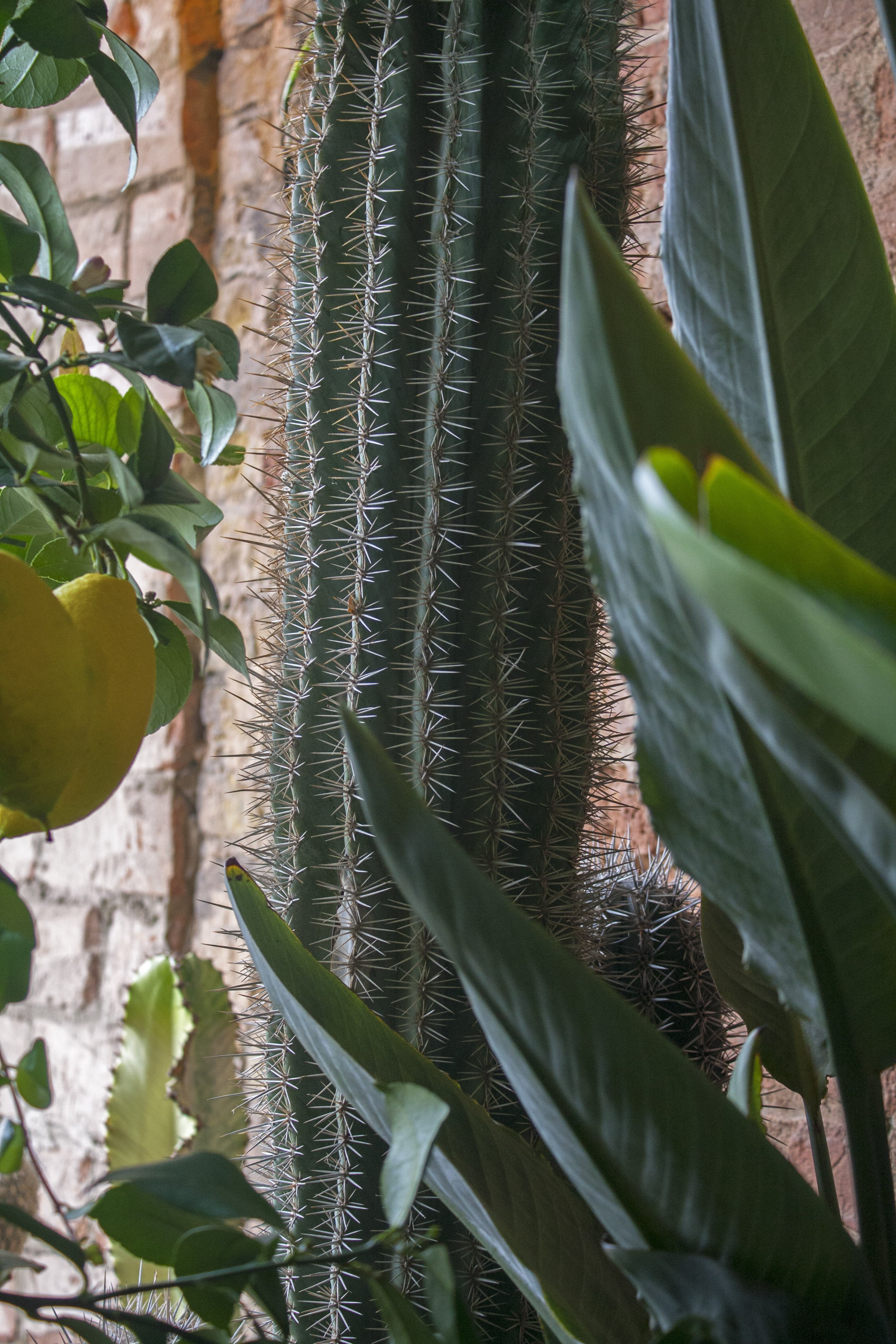cactus, lemon tree and palm tree in Conservatory Archives Hackney