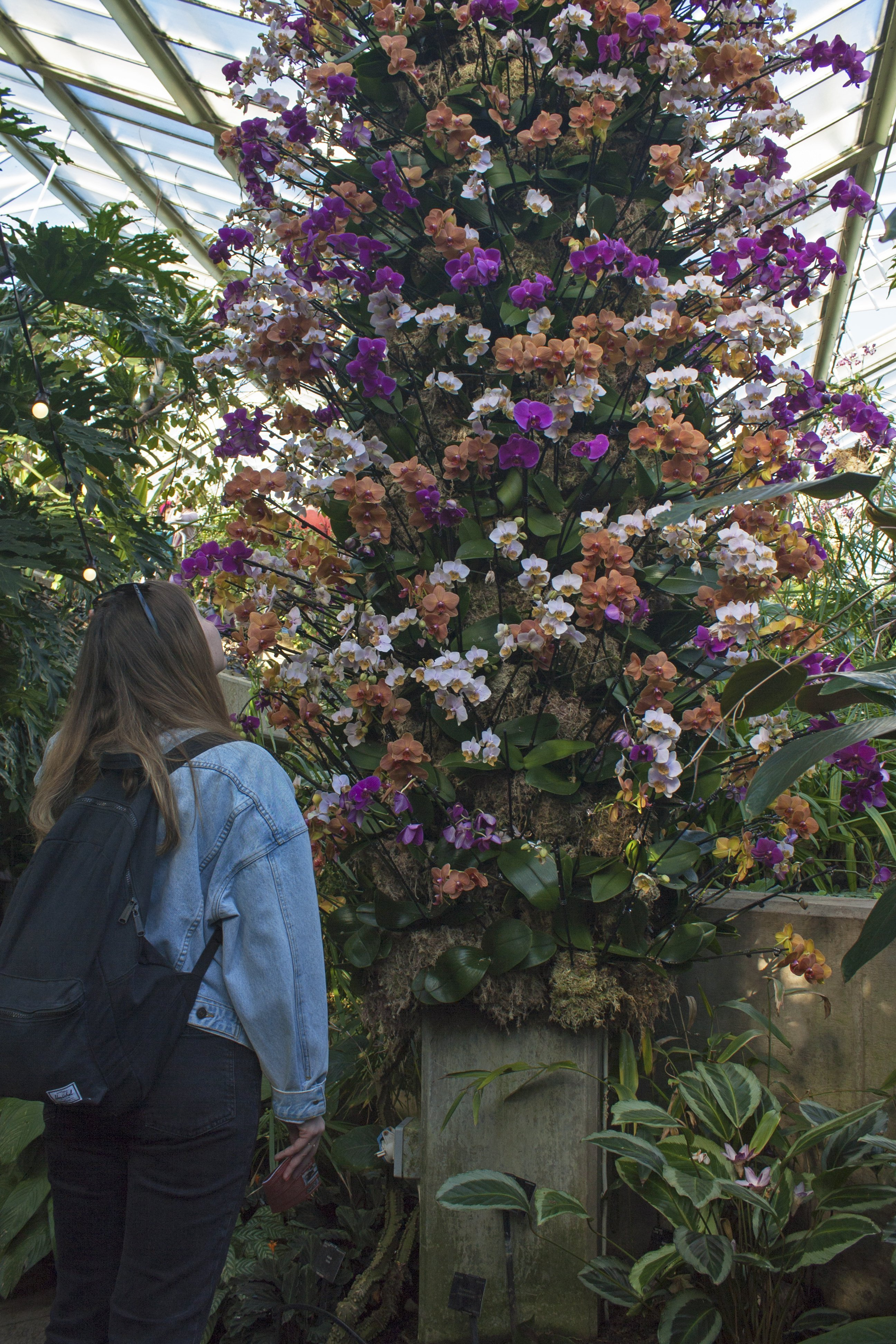 Looking at an orchid pillar at Kew orchid festival