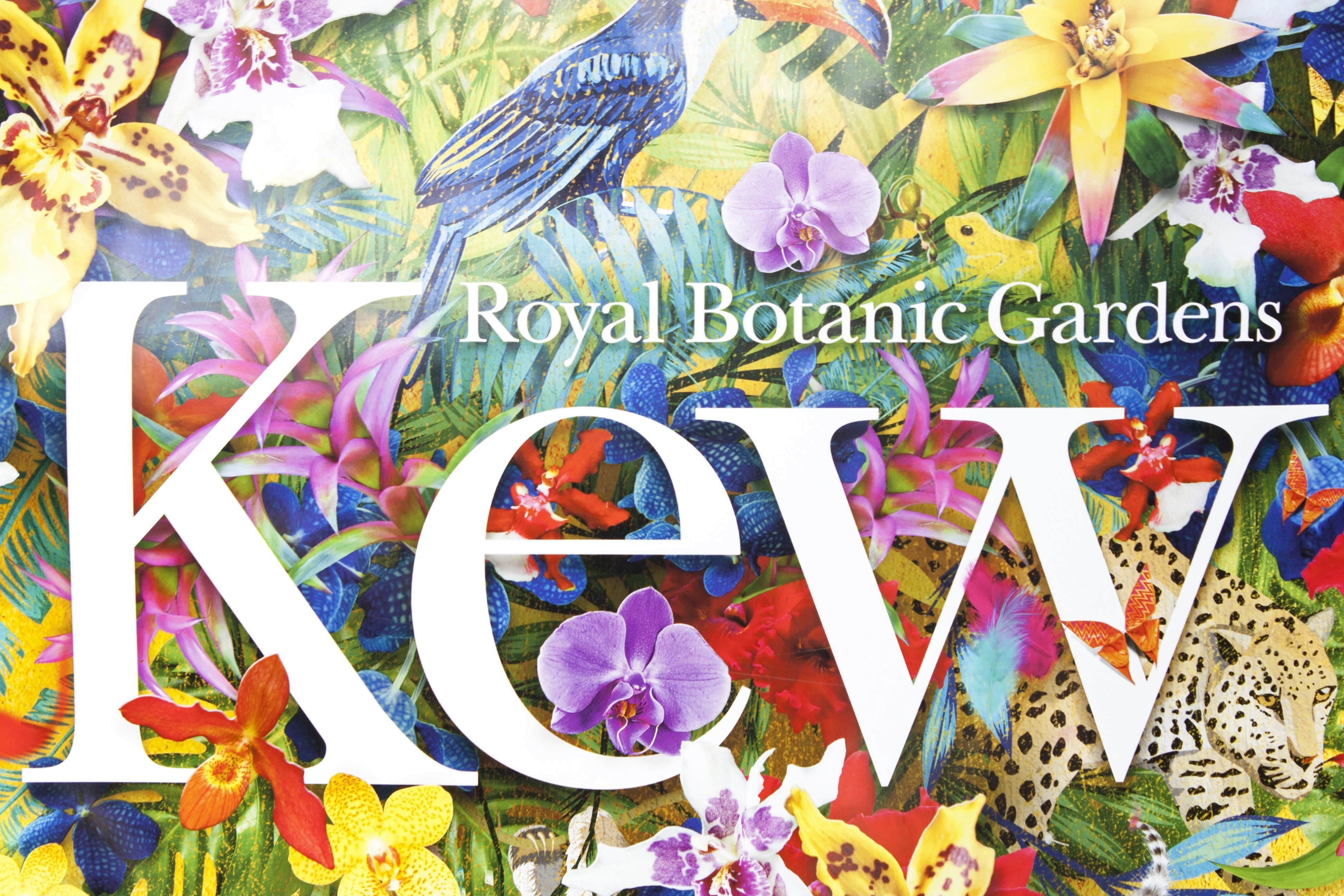 Royal Botanic Gardens Kew orchid festival poster