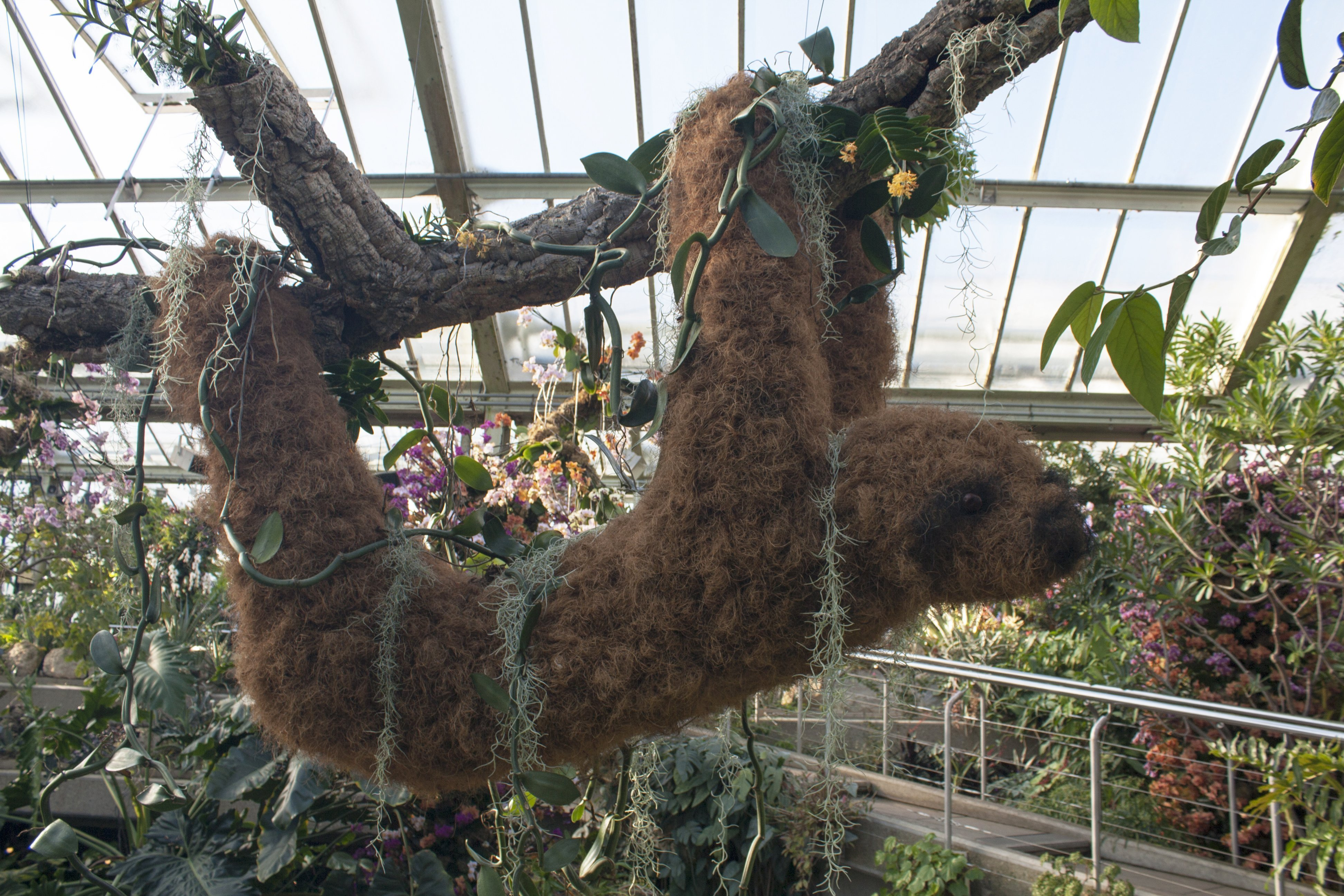 Sloth hanging at the orchid festival, Kew Gardens