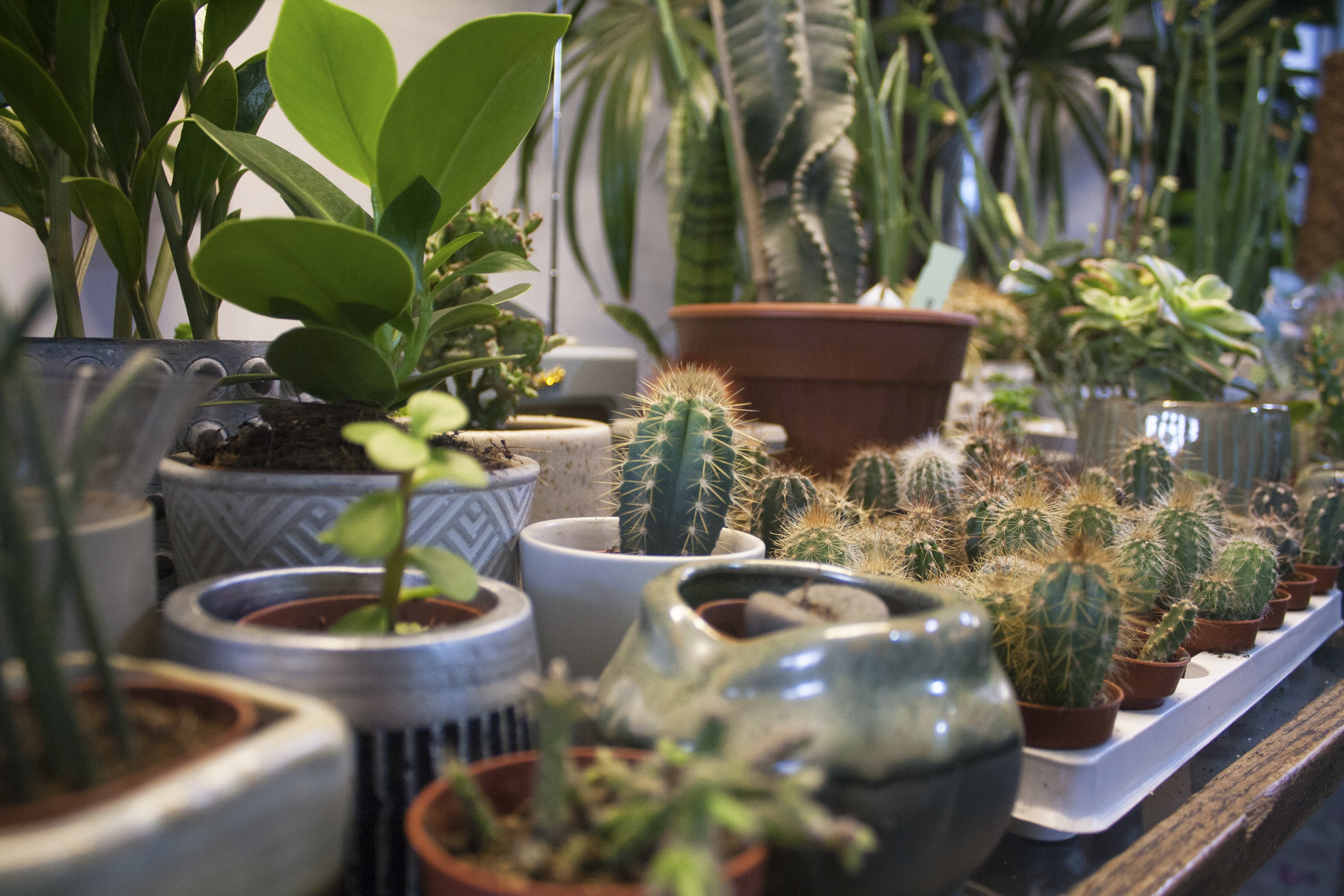 Cacti and plants at Conservatory Archives, Hackney