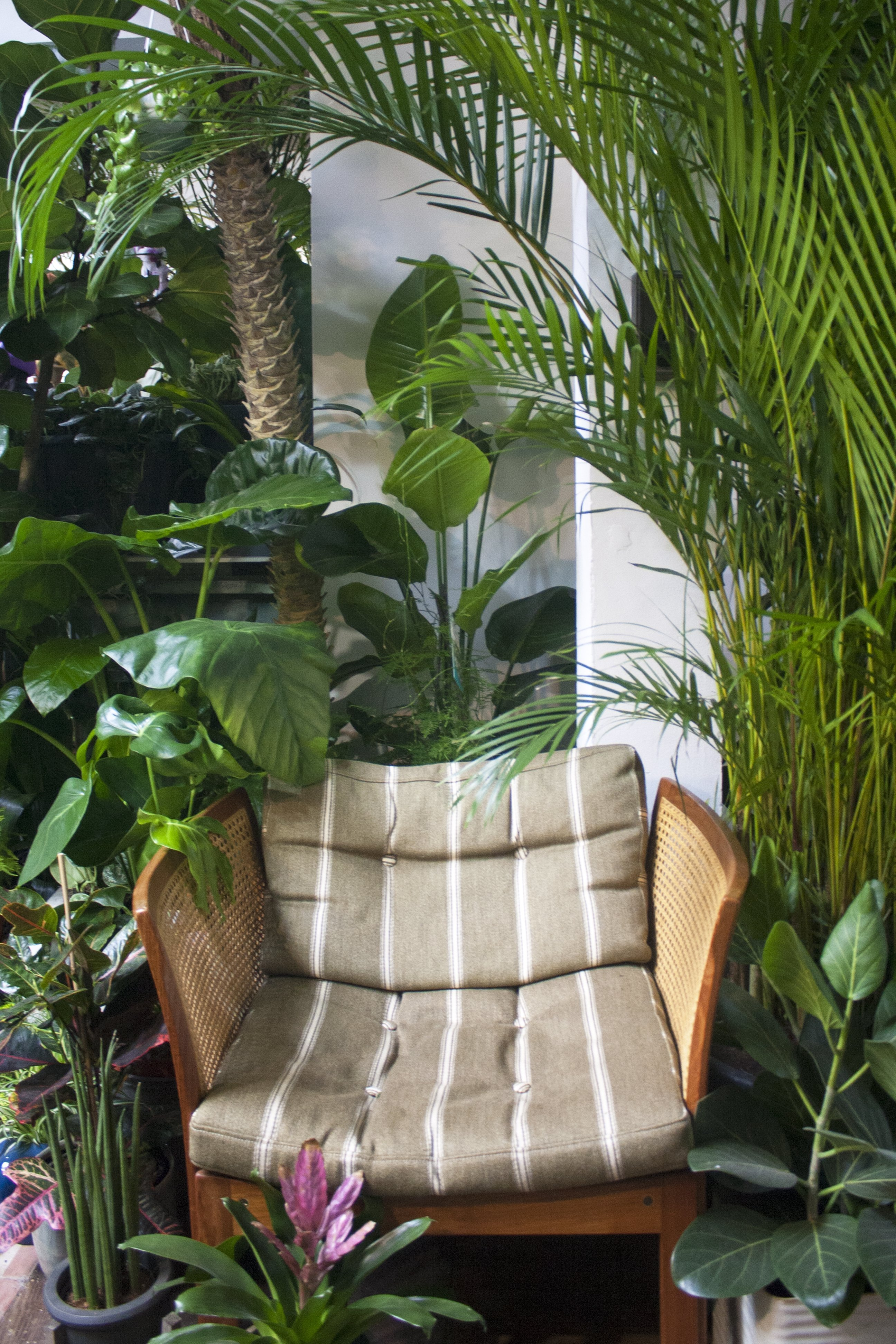 Chair and plants at Conservatory Archives, Hackney