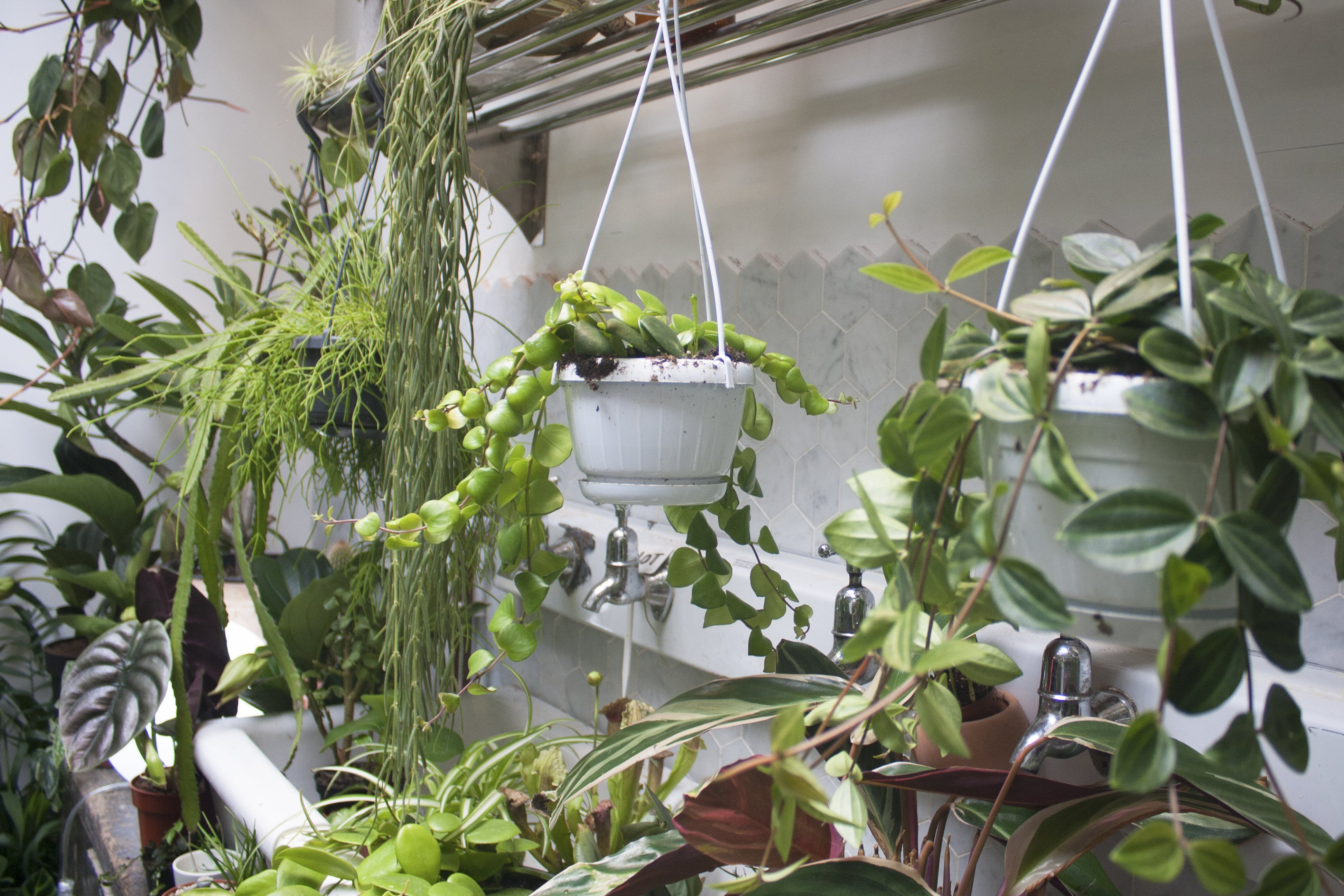 Hanging plants and plants in sink at Conservatory Archives, Hackney