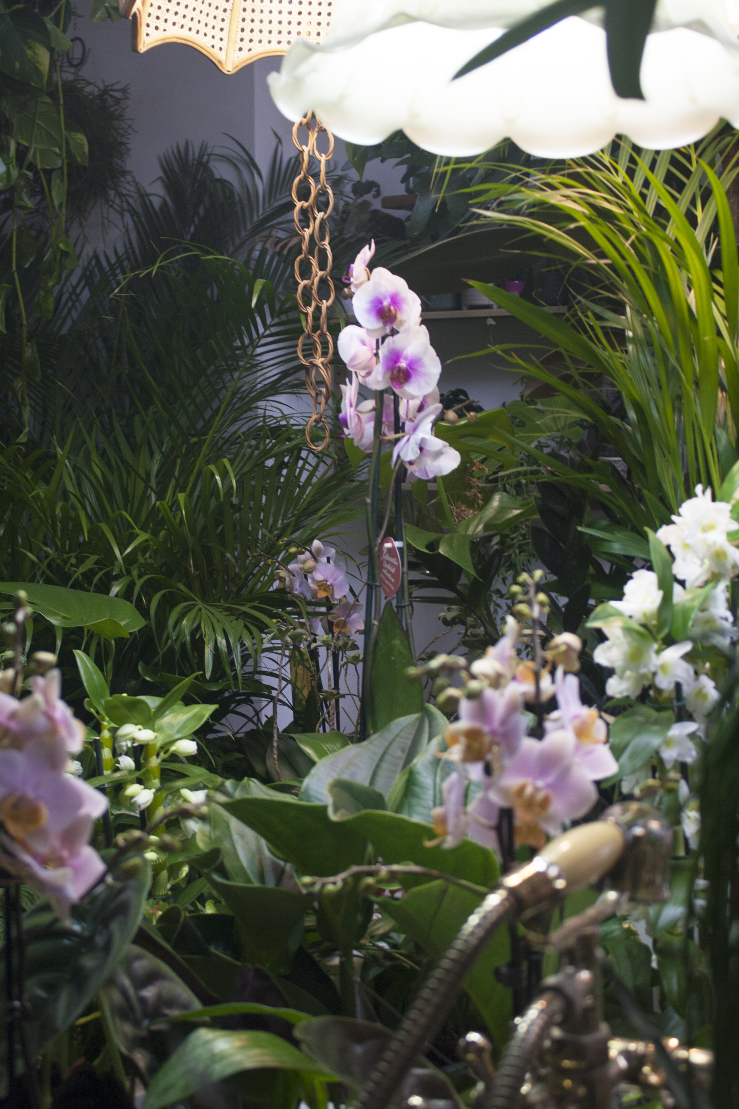 Orchids at Conservatory Archives, Hackney