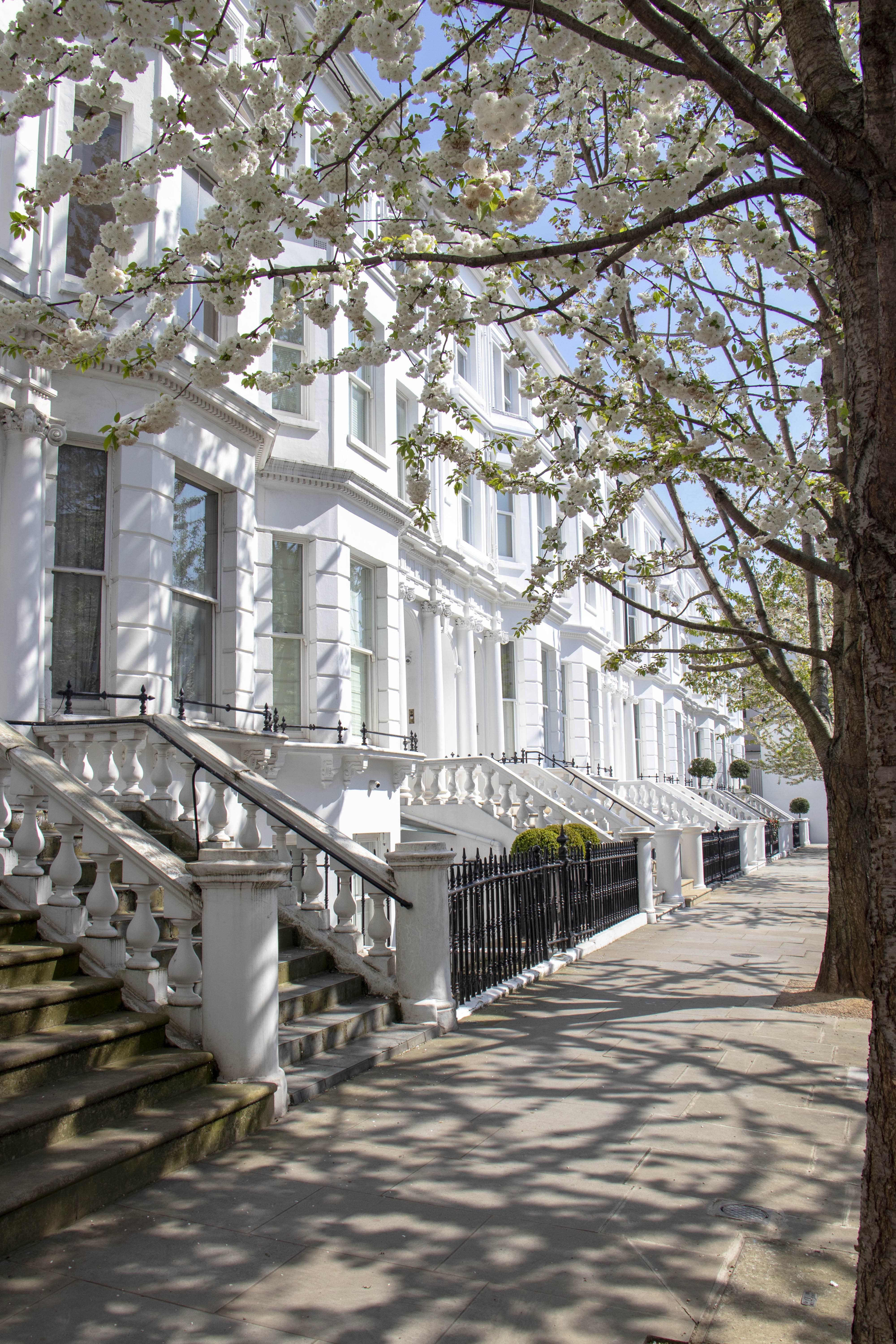Notting Hill houses and tree blossom