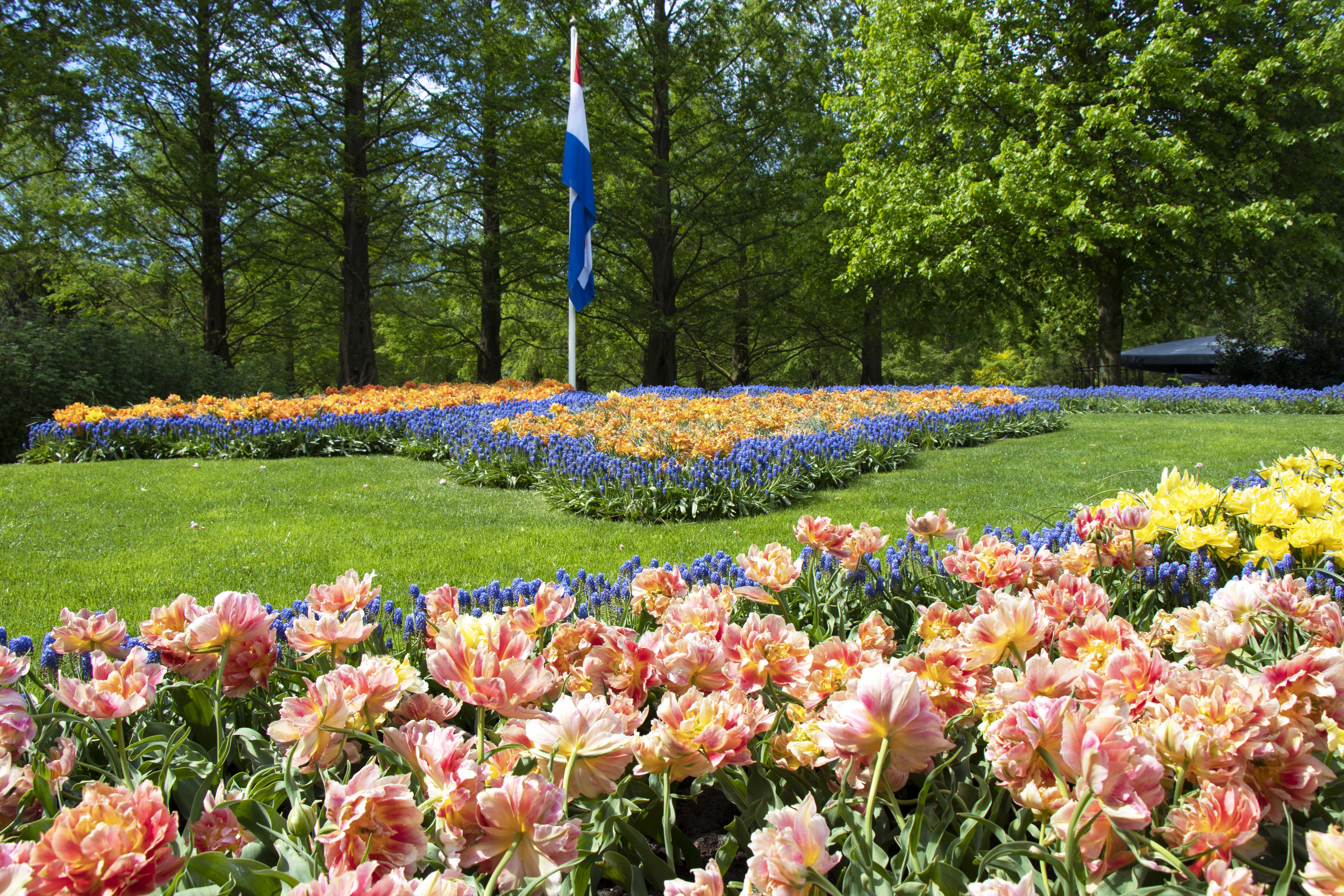Tulip display at Keukenhof, Lisse, Netherlands