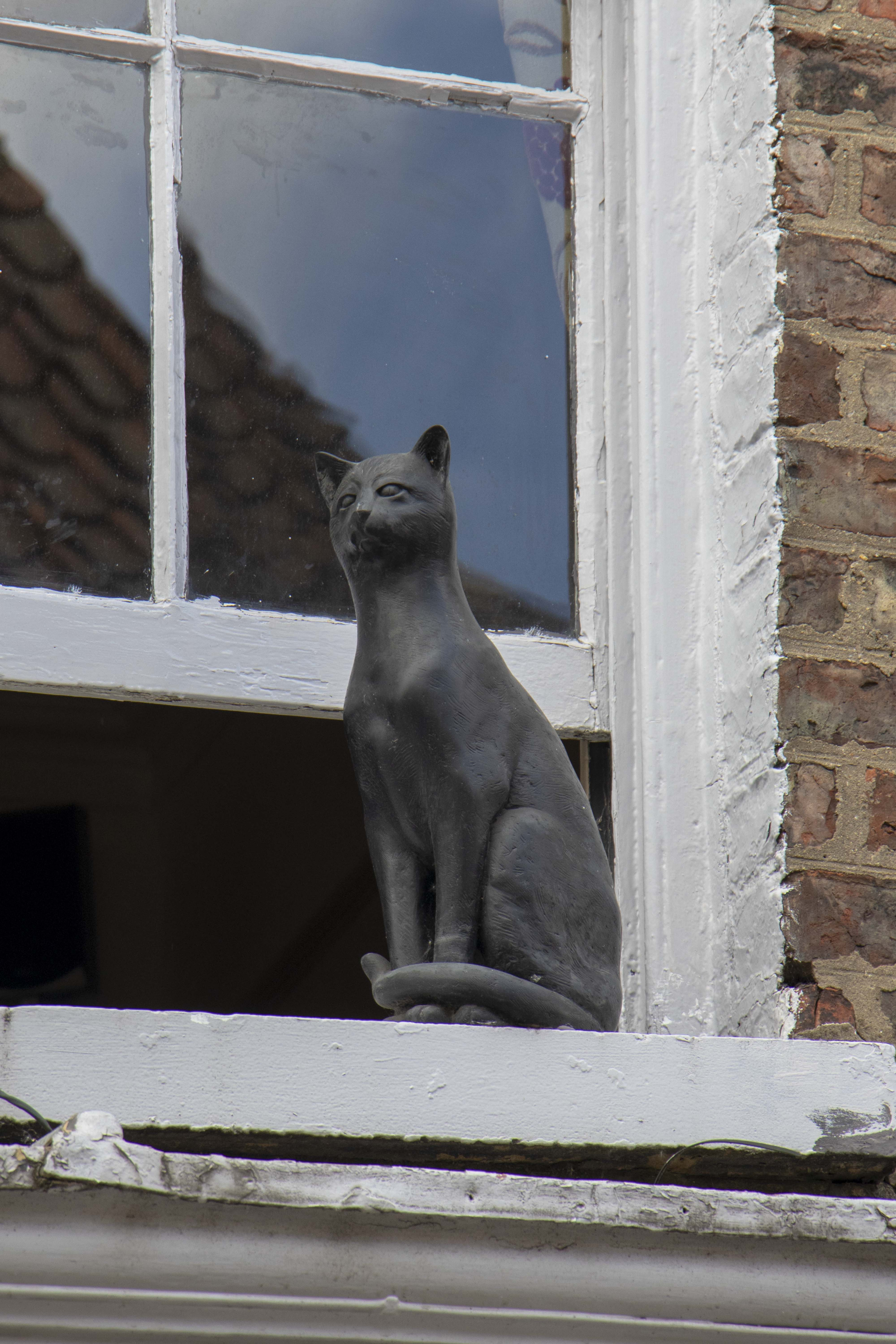 Cat statue on Goji cafe, York lucky cat trail