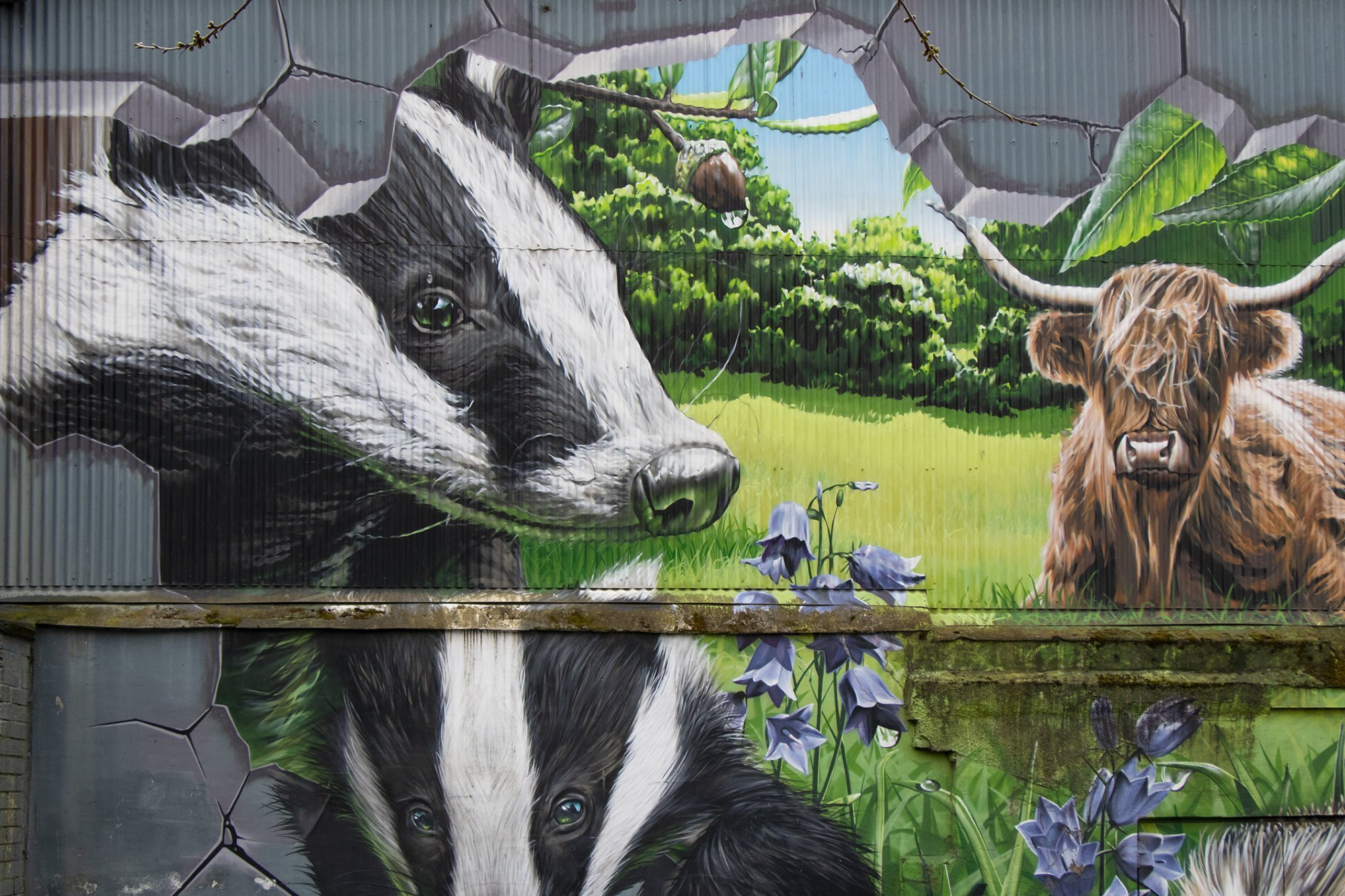 Fellow Glasgow residents - badgers and highland cow graffiti, Glasgow city centre mural trail