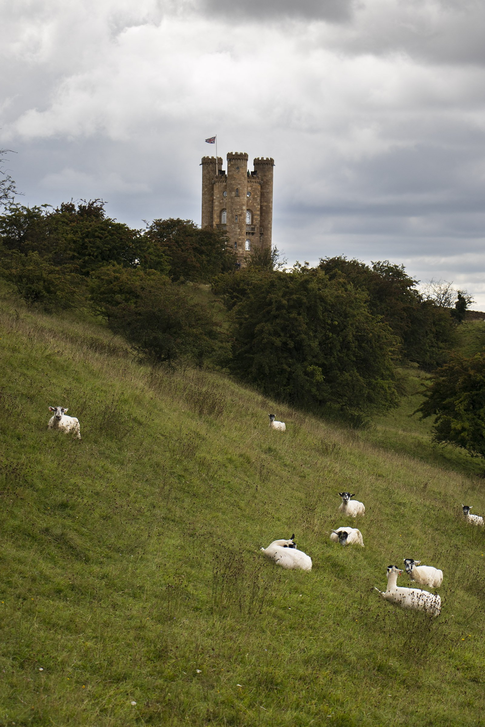 Broadway tower and sheep