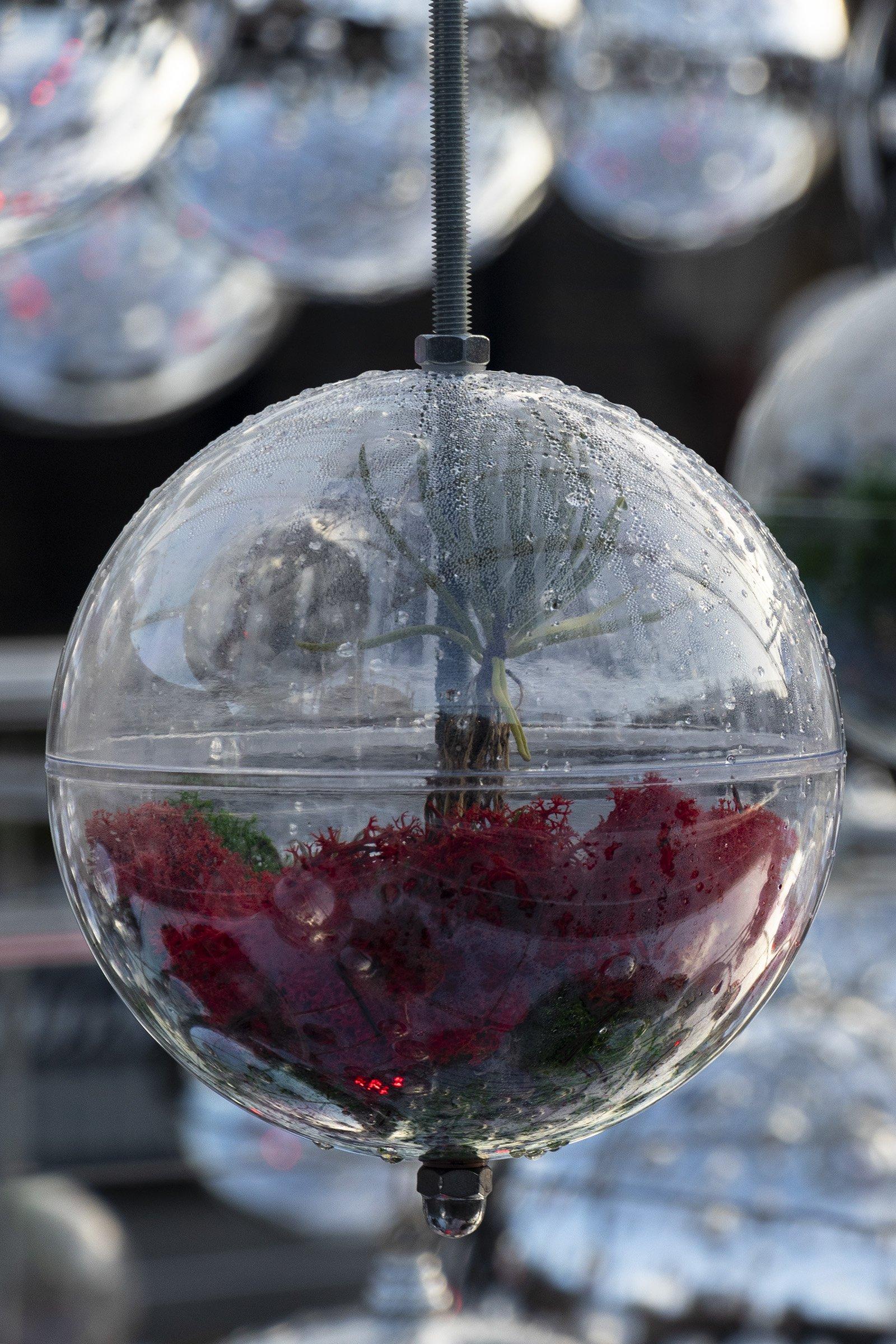 Coal Drops Yard Christmas terrarium tree